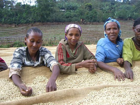 ethiopia-intelligentsia-3
